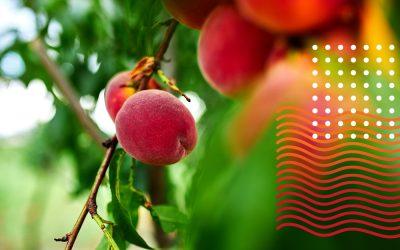 El Puerto de Laredo busca impulsar importaciones de frutas y verduras